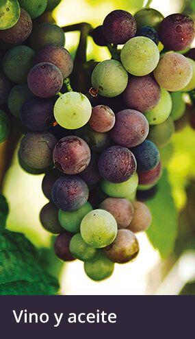 Producción de Vino y Aceite
