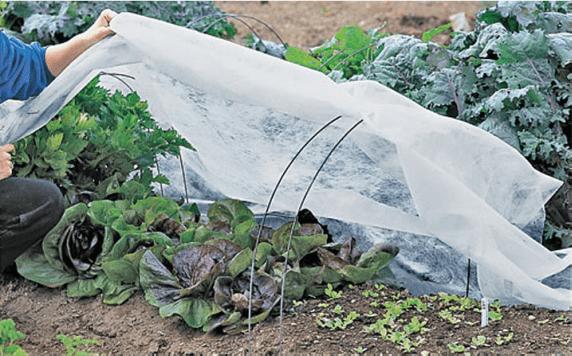 Manta térmica para proteger los cultivos