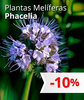 Plantas Melíferas: Phacelia